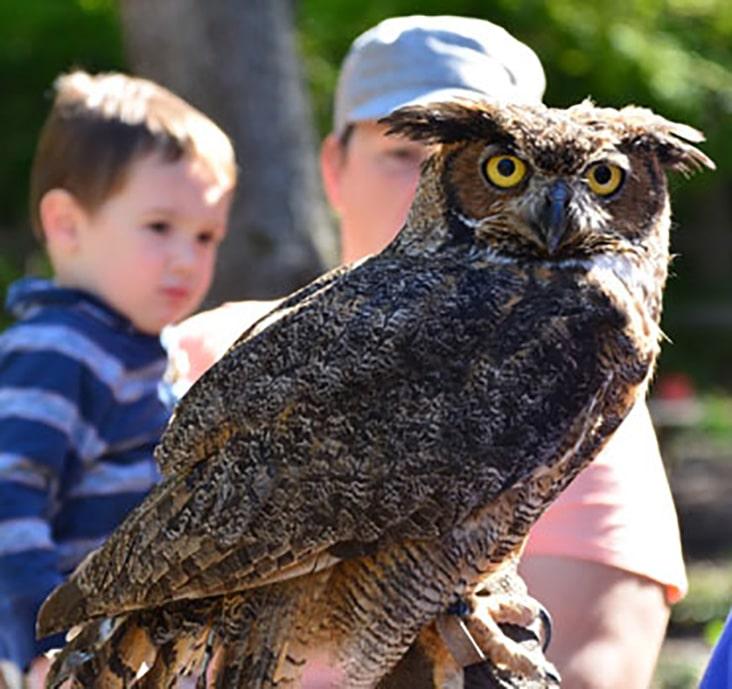 owl at kalamazoo nature center